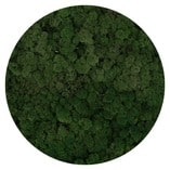 verde moss