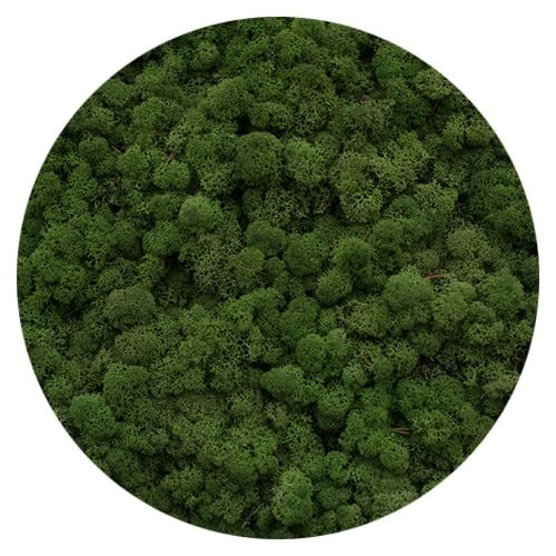 verde medio moss
