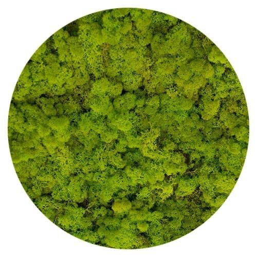 verde primavera moss