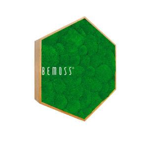 hexagono bolmoss