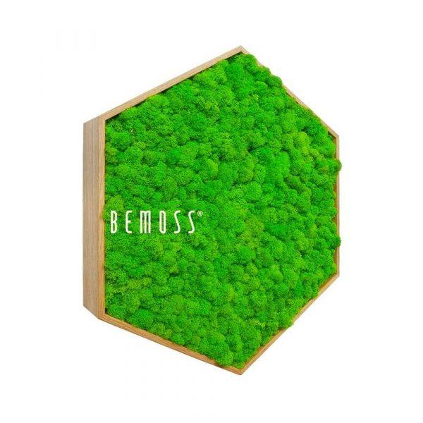 hexagono musgo bolmoss