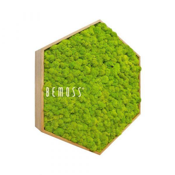 hexagono musgo reno