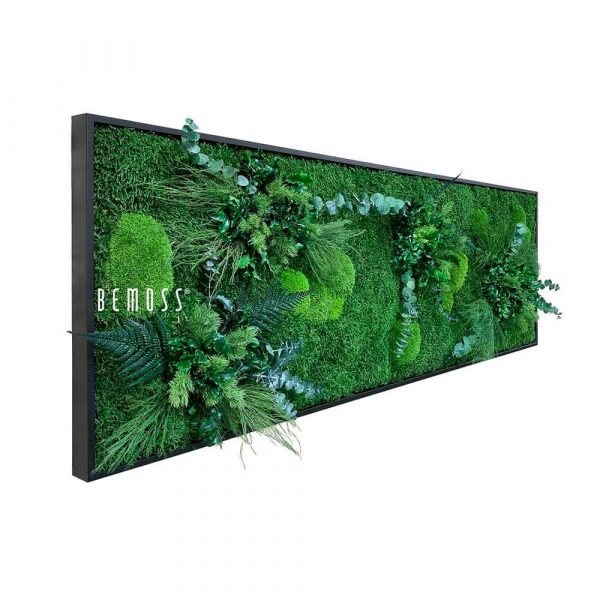 cuadro musgo plantas