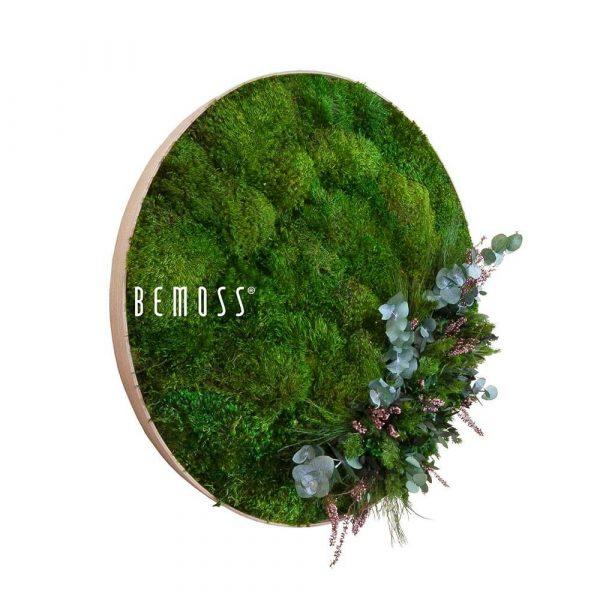 marco redondo musgo plantas